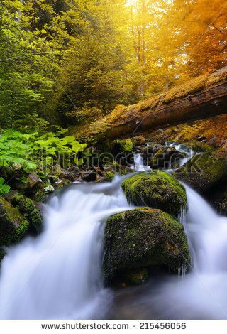 stock-photo-autumnal-forest-with-waterfall-215456056