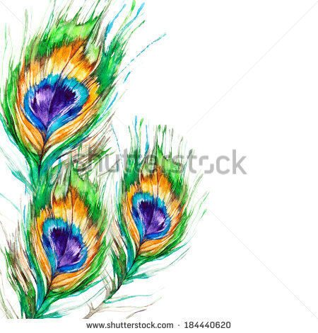 stock-photo-peacock-feather-on-a-white-background-watercolor-picture-184440620