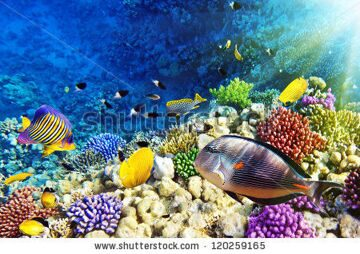 stock-photo-coral-and-fish-in-the-red-sea-egypt-120259165