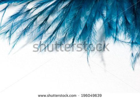 stock-photo-blue-feather-macro-isolated-196049639