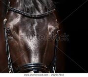 stock-photo-dressage-horse-eye-in-dark-202647610
