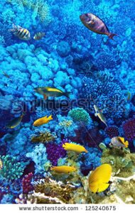 stock-photo-coral-and-fish-in-the-red-sea-egypt-africa-125240675
