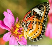 stock-photo-butterfly-on-flower-64339216