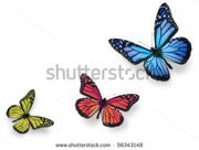 stock-photo-green-pink-and-blue-butterflies-isolated-on-white-with-soft-shadow-beneath-each-56343148