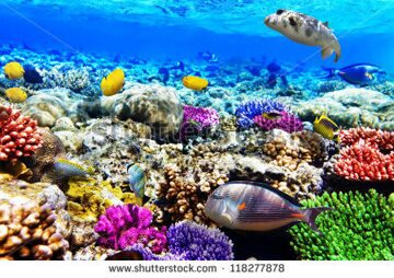stock-photo-coral-and-fish-in-the-red-sea-egypt-africa-118277878