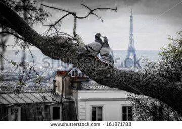 stock-photo-kiss-you-in-paris-two-doves-in-paris-161871788