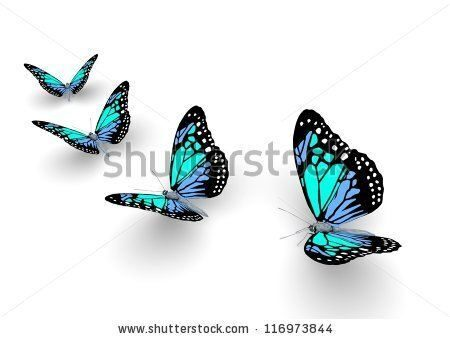 stock-photo-butterfly-isolated-on-white-d-illustration-116973844