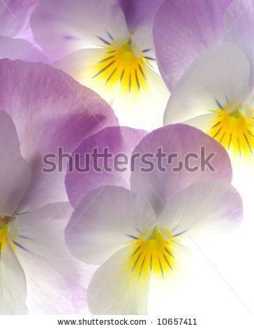 stock-photo-close-up-of-colourful-viola-tricolor-as-a-background-10657411