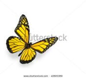 stock-photo-bright-yellow-butterfly-isolated-on-white-43895389