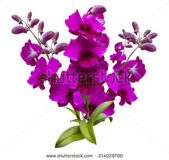 stock-photo-flower-pink-and-purple-streaked-orchid-branch-isolated-on-white-background-214029700