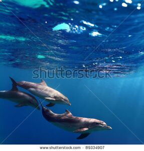 stock-photo-a-small-flock-of-dolphins-playing-in-sunrays-underwater-89334907