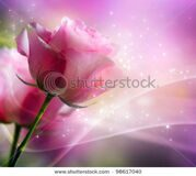 stock-photo-roses-art-design-invitation-card-98617040