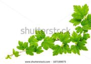 stock-photo-green-plants-background-187199675