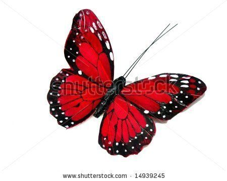 stock-photo-a-red-butterfly-isolated-on-white-14939245