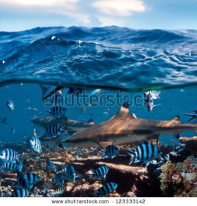 stock-photo-beautiful-seaview-waterline-waves-in-a-shallow-and-sharks-swimming-by-corals-123333142