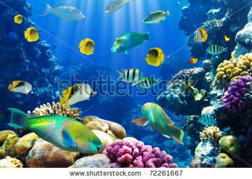 stock-photo-photo-of-a-tropical-fish-on-a-coral-reef-72261667 (1)