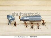 stock-photo-team-of-ants-carries-screwdriver-to-screw-on-wood-teamwork-59797840