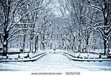 stock-photo-snowy-day-in-central-park-50352748