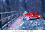 stock-photo-red-autumn-leaf-on-old-wooden-bridge-in-autumn-119743132