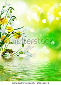 stock-photo-background-of-wild-flowers-and-tree-branches-207452716