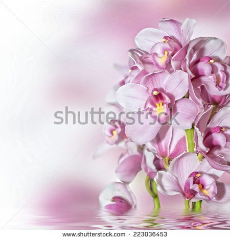 stock-photo-orchids-223036453