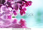 stock-photo-macro-image-of-spring-lilac-violet-flowers-with-water-reflection-abstract-soft-floral-background-214737757