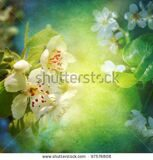stock-photo-spring-blossom-background-97576808