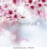 stock-photo-spring-blossom-179751575