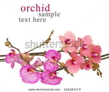 stock-photo-red-and-violet-orchids-close-up-isolated-on-white-background-129483473