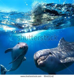 stock-photo-two-dolphins-underwater-and-breaking-splashing-wave-above-them-89433142