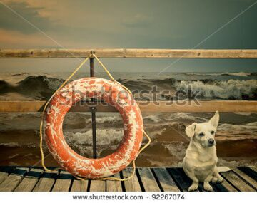 stock-photo-dog-and-lifebuoy-on-the-pier-over-stormy-ocean-92267074