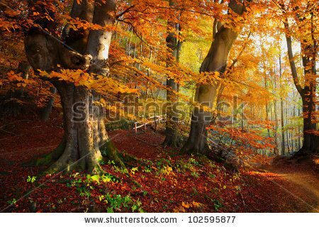 stock-photo-landscape-nice-fantasy-forest-with-creek-in-a-golden-autumn-wall-poster-idea-102595877