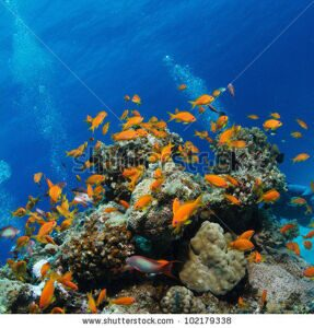 stock-photo-beautiful-coral-reef-full-of-colorful-fish-102179338