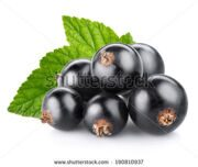 stock-photo-black-currant-berry-isolated-on-white-190810937