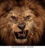 stock-photo-close-up-shot-of-roaring-lion-128702168