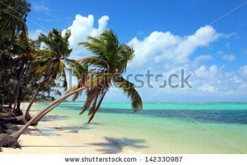 stock-photo-beautiful-tropical-beach-with-coconut-palms-and-blue-sky-the-picture-was-taken-at-the-bavaro-beach-142330987