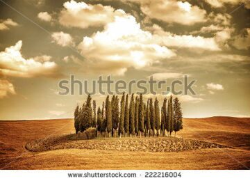 stock-photo-beautiful-autumn-vintage-landscape-several-lonely-trees-in-golden-dry-field-beauty-of-autumnal-222216004