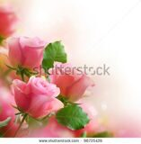 stock-photo-roses-art-design-96735439