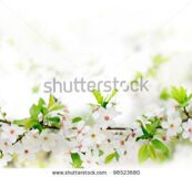 stock-photo-white-spring-flowers-on-a-tree-branch-over-grey-sunny-bokeh-background-close-up-98523680