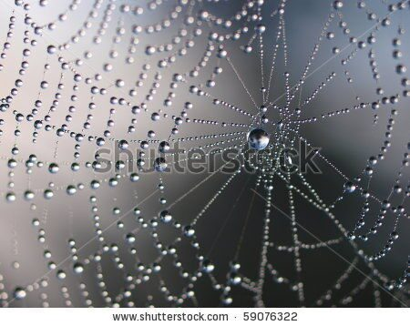stock-photo-spider-net-with-water-drops-simple-composition-59076322