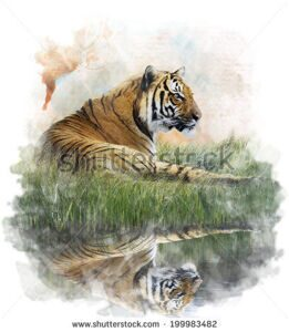 stock-photo-watercolor-digital-painting-of-tiger-on-grassy-bank-with-reflection-199983482