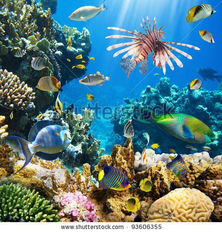 stock-photo-photo-of-a-tropical-fish-on-a-coral-reef-93606355