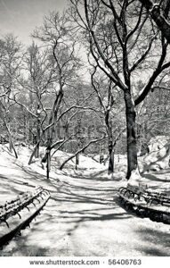 stock-photo-snowy-day-in-central-park-56406763