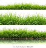stock-photo--style-fresh-spring-green-grass-isolated-on-white-background-82532323