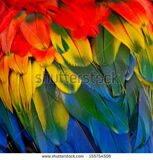 stock-photo-scarlet-macaw-feathers-colorful-background-texture-155754506