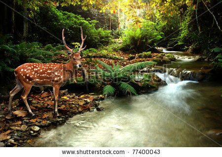 stock-photo-tropical-stream-and-sika-deer-77400043