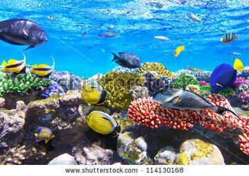stock-photo-coral-and-fish-in-the-red-sea-egypt-114130168