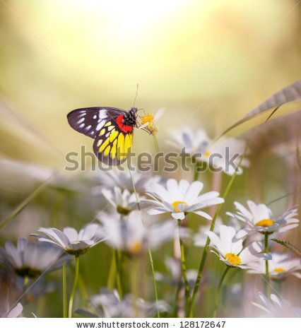 stock-photo-butterfly-on-the-flower-128172647