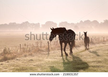 stock-photo-horse-and-foal-silhouettes-in-fog-at-sunrise-219931357