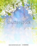 stock-photo-cherry-blossoms-over-blurred-nature-background-spring-flowers-spring-background-with-bokeh-171890060